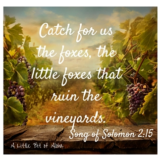 Catch for us the foxes, the little foxes that ruin the vineyards.